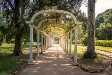 Jardim Botanico Botanical Garden - Rio de Janeiro, Brazil