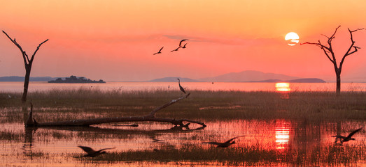 Panorama of a sunset over Lake Kariba with a silhouette of a Grey Heron and Egyptian Geese in flight.  Matusadona NationalPark, Zimbabwe Wall mural
