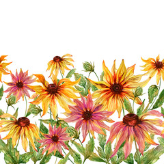 Beautiful echinacea flowers (coneflower) with green leaves on white background. Seamless floral pattern. Watercolor painting. Hand painted illustration.