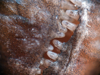 worn out fish teeth