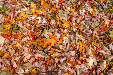 autumn leaves covering ground