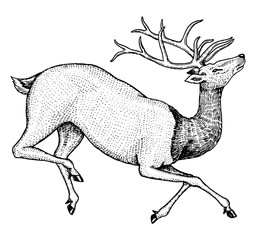 Soaring deer. Wild animal jumping. Horned mammal. Monochrome Vintage style. Engraved hand drawn sketch for tattoo or label.