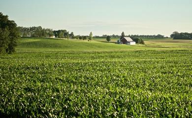 Minnesota Farm Corn scape