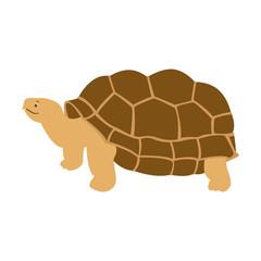 cartoon turtle  vector illustration flat style front
