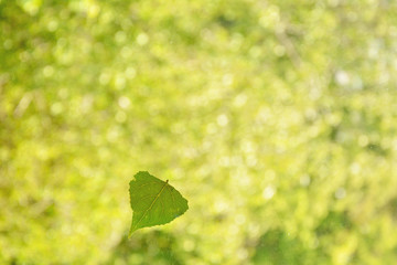 Green leaf, nature, sun, leaf from a tree, leaf on glass, trees, greenery, sun, summer, spring, hope, sadness, longing, love, memories, comfort, home, warmth, romance