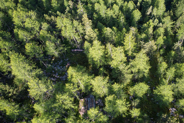 forest from bird's eye view