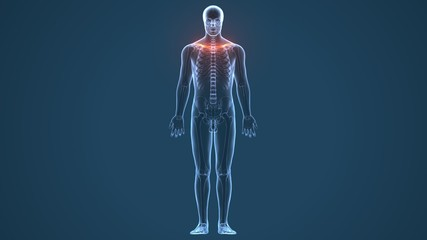3D illustration of Ribs - Part of Human Skeleton.