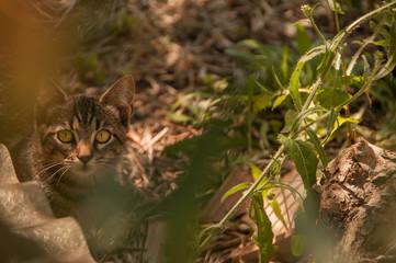 kitten in the garden among the plants