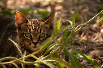 kitten in the garden among the plants