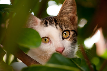 kitten looks into the crack in the foliage of the tree