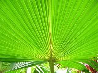 A huge green palm frond