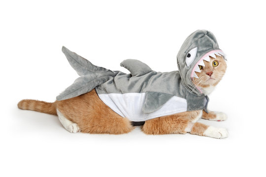 Cat Wearing Funny Shark Halloween Costume