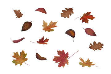 Falling Colorful Autumn Tree Leaves