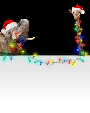 Zoo Giraffe and Elephant Christmas Light Banner