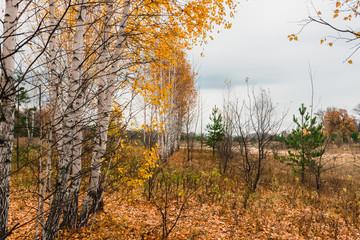 луга в пойме среднего течения реки Волга, Россия - типичный ландшафт лесостепной зоны.