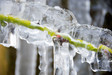 Big icicles in winter