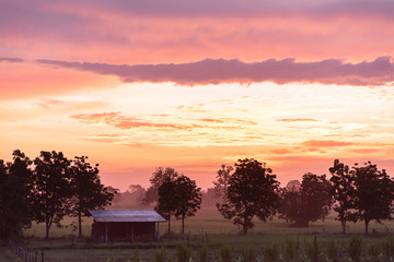 Beautiful sunrise at agricultural field in Nakhon Ratchasima, Northeast of Thailand