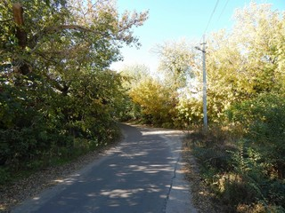 Rural road in the summer. Asphalt road through the forest. Deciduous trees on the roadside. The photo.
