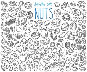 Nuts doodles set. Hand drawn vector illustration isolated on white background