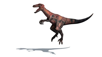 Dinosaur - Velociraptor - Two-legged,  predator with a long, stiff tail - isolated on white background