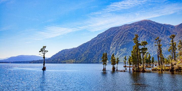 Kahikatea Trees in Lake Brunner, West Coast, New Zealand