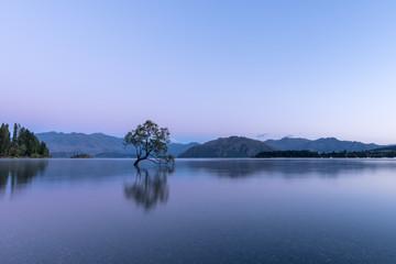 Wanaka Tree Neuseeland