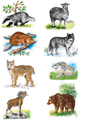 Illustration. Animals Bear. Sheep. Wolf. Hare. Lynx. Badger. Ram. Beaver. Against the backdrop of nature.