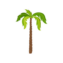 Palm tree with big bright green leaves and brown trunk. Exotic plant. Element of tropical jungle. Nature theme. Fflat vector icon