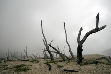 forest dead, volcano eruption, end of the world, apocalypse Fototapete