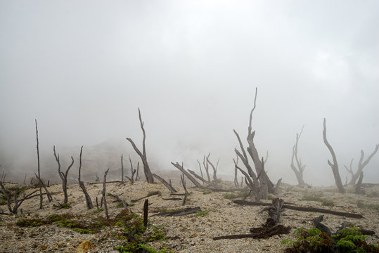 landscape of natural elements, burnt forest in fog and smoke