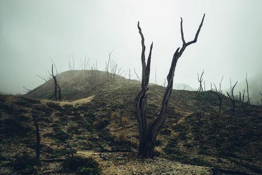 dead dry wood burned nature tree