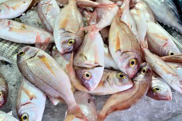 fresh dorado fish at the fish market macro