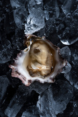 Oyster in ice