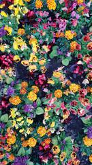 Multi color flowers in a field, long