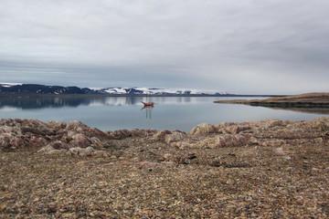 """Segelschiff """"Noorderlicht"""" vor Spitsbergen"""