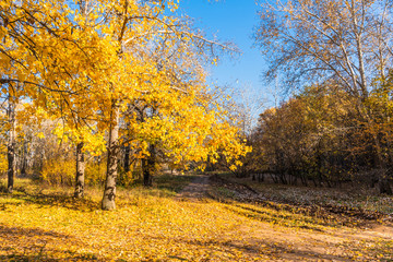 Autumn landscape - sun and trees with golden leaves
