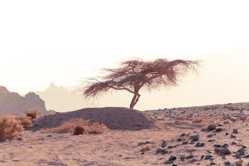 Desert in Egypt. Sharm el Sheikh. Sand and Sand Borkhan. Rock and sunset.