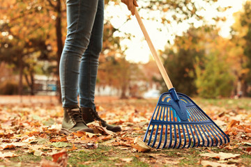 Woman cleaning up fallen leaves with rake, outdoors. Autumn work