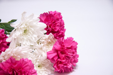 Romantic horizontal floral banner. White beautiful chrysanthemums and pink carnation