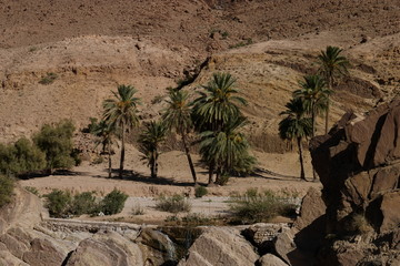 Desert oasis with trees