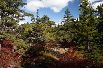 Acadia National Park, ME, USA.