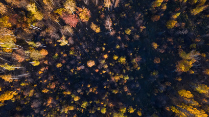 Aerial view. Directly above the deciduous forest in autumn. Top view of the grove with Oak and birch trees. Red, yellow and green lush foliage on the trees.