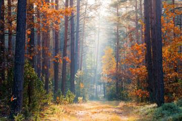 Fototapeten Wald Autumn scenery