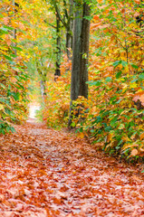 Autumn forest nature background. Autumn, fall forest. Path of red leaves towards light.