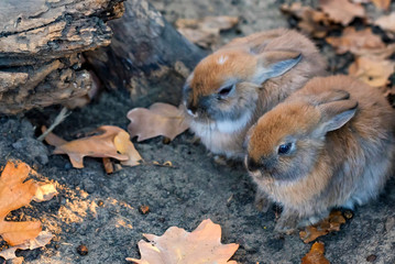 Close up picture of two young cute rabbits
