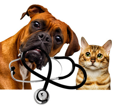 veterinarian dog and cat