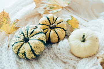 Autumn leaves and small decorative pumpkins on warm cozy knit sw