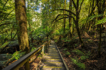 Great Otway National Park. Otway fly tree top walk.