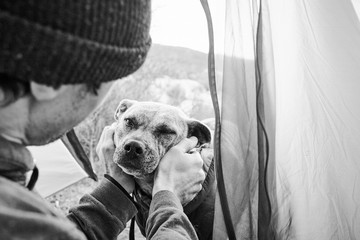 A dog looking into a tent while camping