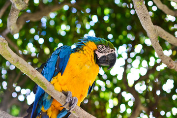 Colorful and beautiful yellow macaw